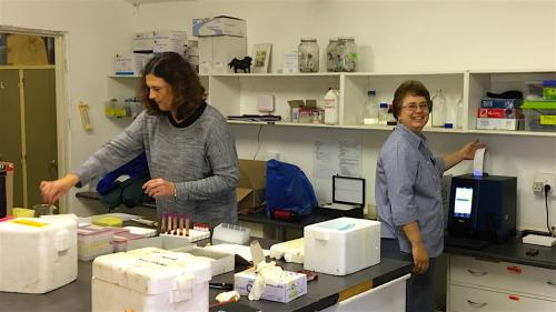 Amelia Goddard and Carien Muller running the labs