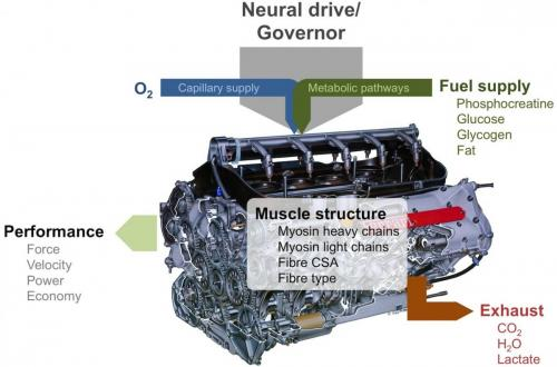 Mammalian engine